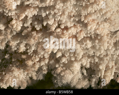 popcorn and frostwork, Wind Cave National Park, South Dakota - Stock Photo
