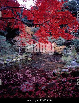 Koto-In Daitokuji Kyoto - Autumn Leaves - Stock Photo