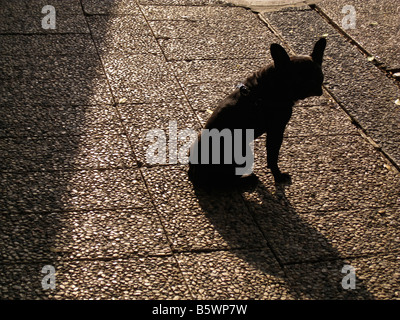 A black dog - Stock Photo