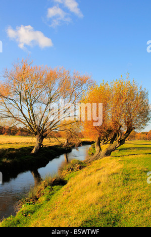 Weeping willow trees along a stream in Richmond Park, Richmond Upon Thames Surrey UK - Stock Photo