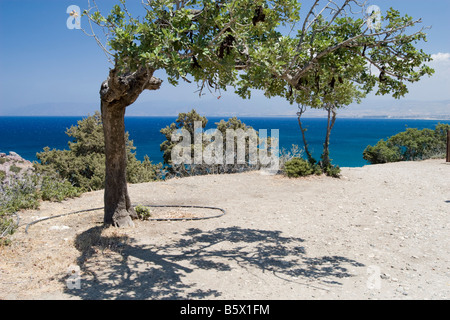 Seascape view from the hill in park near Aphrodite bath Cyprus with bend tree in front - Stock Photo