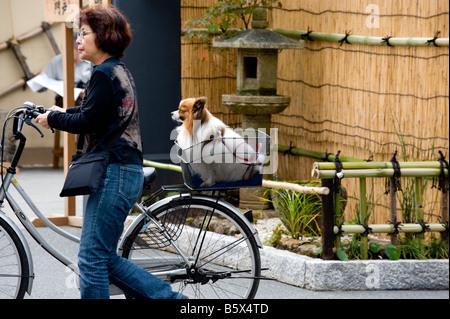 Dog riding in a bicycle basket at the Sensoji Temple in Asakusa, Tokyo, Japan. - Stock Photo
