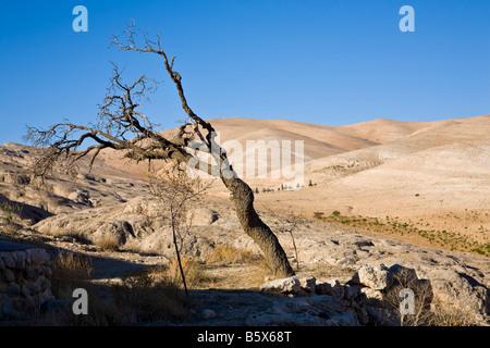 A tree and hills. Maalula, Rif-dimashq, Syria. - Stock Photo