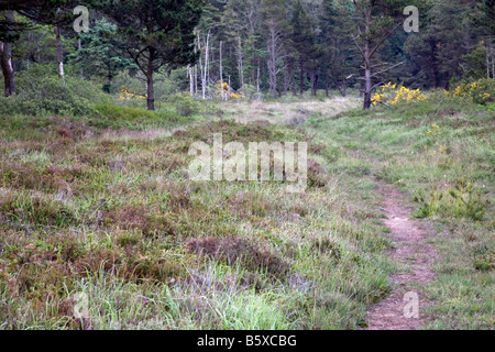 croft pascoe national nature reserve near goonhilly cornwall - Stock Photo