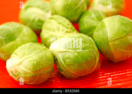 Sprout cabbage - Stock Photo