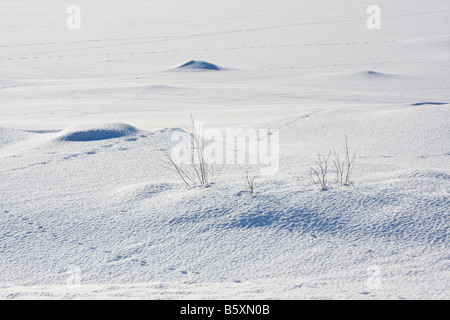 Snow covered lake and shore with animal tracks Valdres Norway - Stock Photo