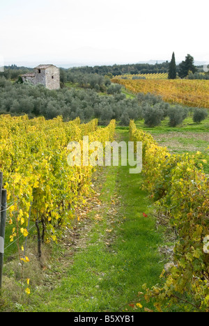 rows of grape vines in the autumn in front of a stone house in Chianti, Tuscany - Stock Photo