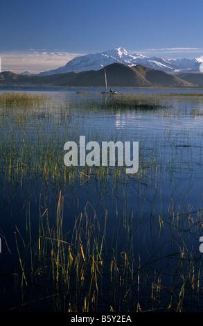 Lake Titicaca, totora reeds (Schoenoplectus californicus ssp. tatora) and Mt Ancohuma, Bolivia - Stock Photo