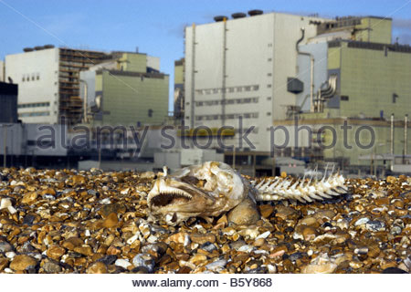 Dogfish skull with Dungeness Nuclear Power Station in the background, Kent, UK - Stock Photo