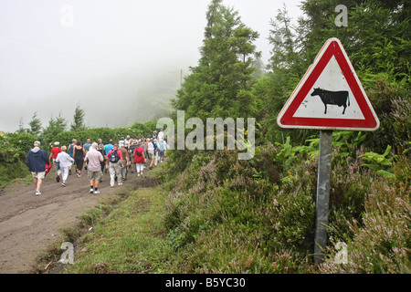Warning sign for cows Tourists walking on the narrow road on the crater edge from Visto do Rei going west, São Miguel, - Stock Photo