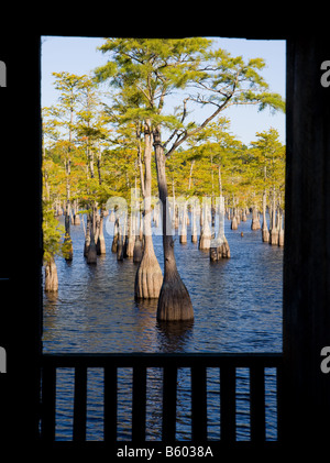 Cypress Trees in the water as seen in South Georgia, USA.  Framed by the window of an old mill. - Stock Photo