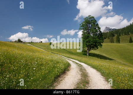 Track through alpine meadows in front of the Drei Brueder Mountains, Salzburger Land, Austria, Europe - Stock Photo