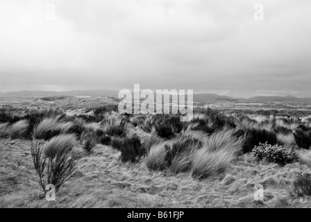 Rangipo Desert is a desert-like environment in New Zealand, located in the Ruapehu District on the North Island - Stock Photo