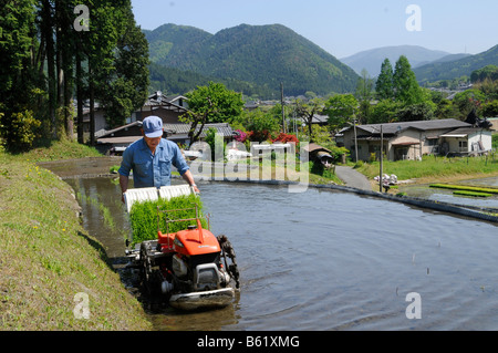Japanese rice farmer using a rice-planting machine in a flooded rice terrace in Ohara, near Kyoto, Japan, Asia - Stock Photo