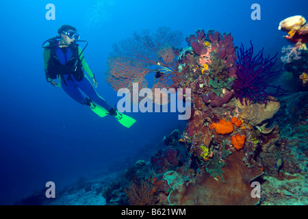 Scuba diver in colourful coral reef, Indonesia, South East Asia - Stock Photo