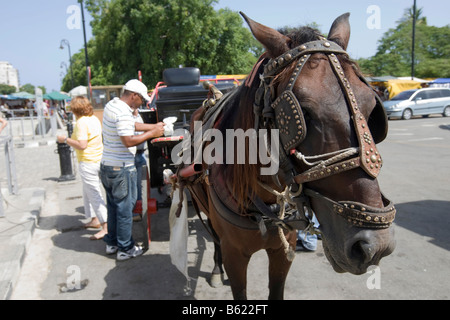Horse and carriage in the historic city centre of Havana, Cuba, Caribbean - Stock Photo