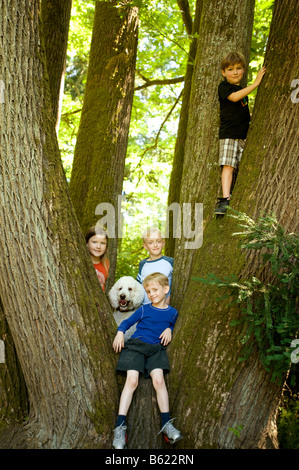 A group of neighborhood kids ages from 5 to 10 hang out in a tree with their pet poodle - Stock Photo