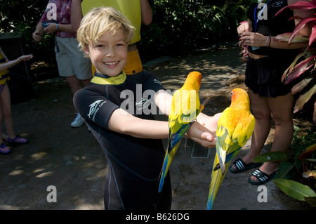 Child feeding parrots, Discovery Cove, Orlando, Florida, USA, North America - Stock Photo