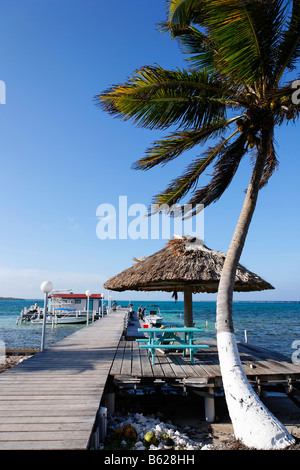 Palm tree with a jetty, Turneffe Flats, Turneffe Atoll, Belize, Central America, Caribbean - Stock Photo