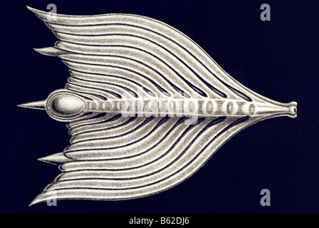 Thalamophora / Kammerlinge, Name Globigerina, Haeckel, Kunstformen der Natur, art nouveau, 20th century, Europe - Stock Photo