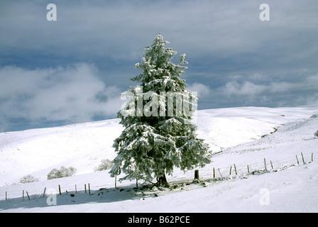 Fir tree in winter snow landscape scene - Stock Photo