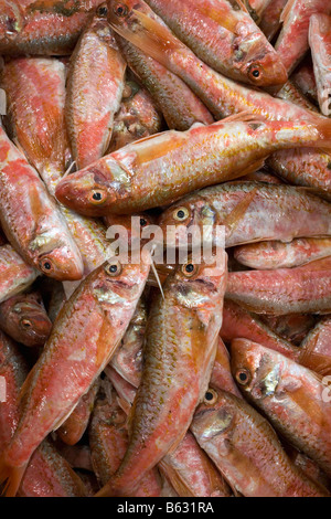 Holland Flevo Urk Fish auction Red mullet - Stock Photo