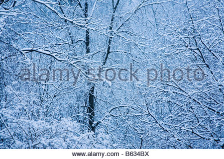 Carolinian forest after first winter snow in Rouge Park an urban wilderness in Toronto Ontario Canada - Stock Photo