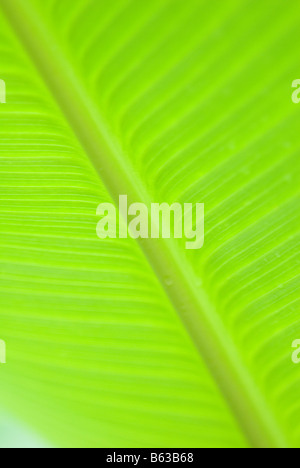Spine of a green leaf - Stock Photo