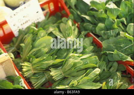bunches of fresh spinach - Stock Photo