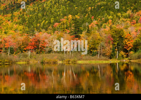 Autumn colours around Willey Pond Crawford Notch State park Route 302 White Mountains New Hampshire USA United States - Stock Photo