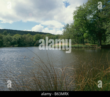 Cannop Ponds, Gloucestershire, Forest of Dean, England, UK, Europe - Stock Photo