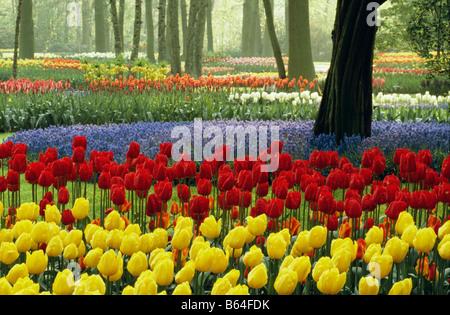 The Netherlands, Lisse. Flower gardens called De Keukenhof. Tulips. - Stock Photo