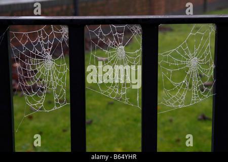 """frozen spiders web"" - Stock Photo"
