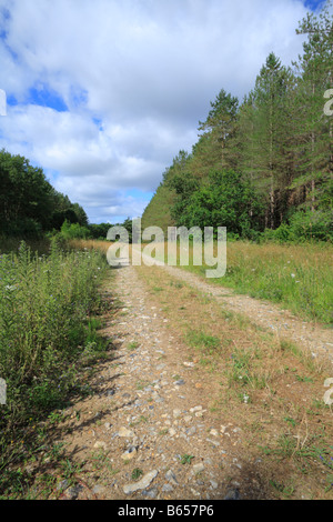 Track through pine woodland in Thetford Forest, Breckland district, Norfolk, England. - Stock Photo
