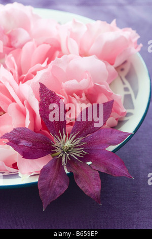 Purple clematis flower and pink roses - Stock Photo