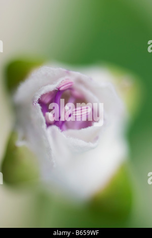 Flower wrapped in gauze, close-up - Stock Photo