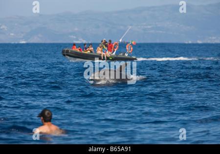 Tourists at Dolphin watching Tour Tursiops truncatus Azores Atlantic Ocean Portugal - Stock Photo