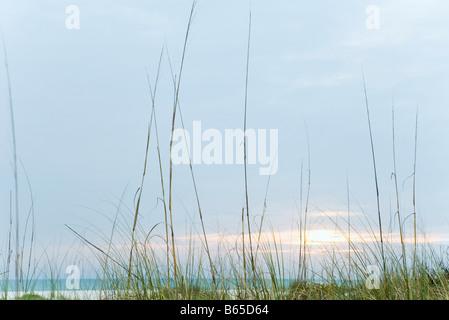 Beach sunset, tall dune grass in foreground - Stock Photo