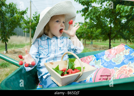 Little girl sitting in wheelbarrow eating raspberries stuck on her fingers - Stock Photo