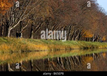 Hornbeam trees (Carpinus betulus) reflecting in water, Herreninsel island, lake Chiemsee, Chiemgau, Upper Bavaria, - Stock Photo