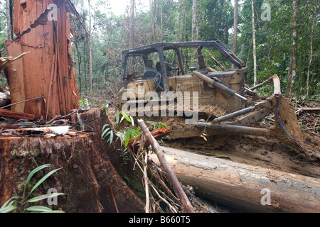 loggers bulldozing through the forest to extract trees which had been felled, Paradise Forest, Papua New Guinea - Stock Photo