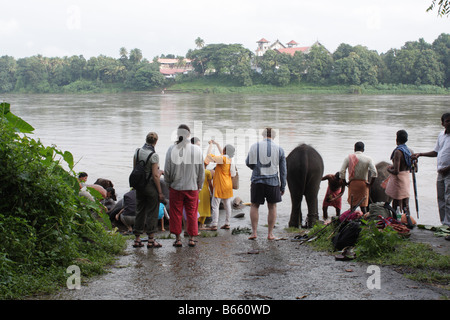 Amazed foreign tourists watching elephants being scrubbed and  bathed on Periyar river bank in Kodanad, Kerala, - Stock Photo