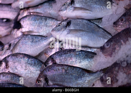 Sea fish on a counter in a supermarket in Croydon. - Stock Photo