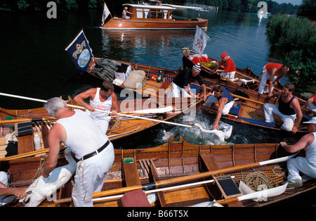 Cygne tuberculé Cygnus olor England thames Swan Upping is an annual ceremonial and practical activity in England - Stock Photo