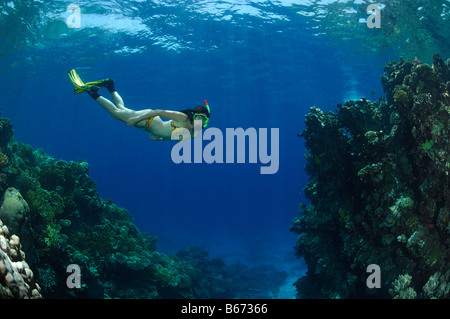 Skin Diver over Coral Reef Marsa Alam Red Sea Egypt - Stock Photo
