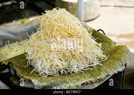 Close-up of bean sprouts, Fuli Village, Yangshuo, Guangxi Province, China - Stock Photo