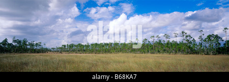 Everglades National Park, Florida, sawgrass marsh meets pinelands ridge under cloud filled sky - Stock Photo