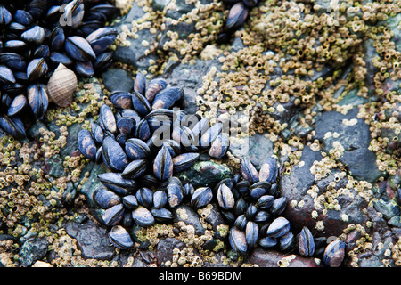 Mussels and bar...
