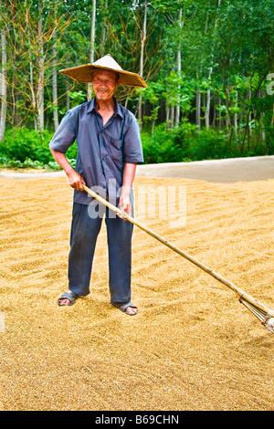 Farmer drying rice in a field, Zhigou, Shandong Province, China - Stock Photo