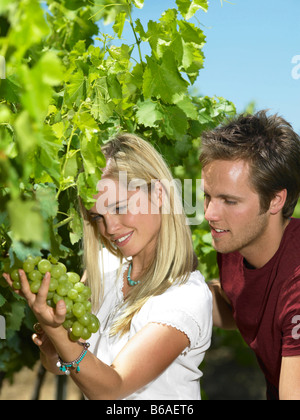 Woman looking at grapes on vine - Stock Photo